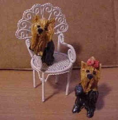 Yorkie auf einem Stuhl