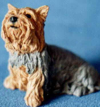 Sitting Silky Terrier