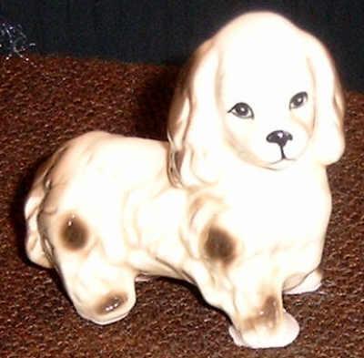 Cocker Spaniel - Junghund
