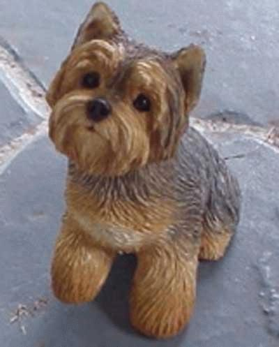 Sitzender Yorkshire Terrier - Welpe