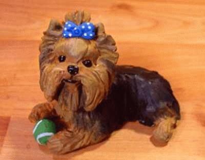Spielender Yorkshire Terrier