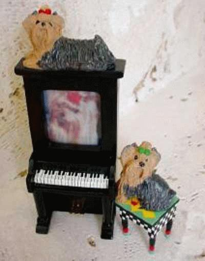 Klavier mit Yorkies