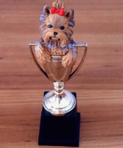 Yorkshire Terrier in einem Pokal