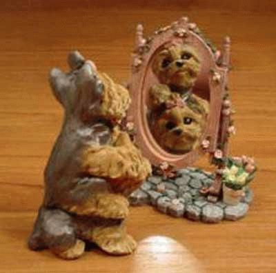 2 Yorkshire Terrier schauen sich im Spiegel an