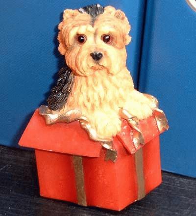 Yorkie in einer Geschenkkkarton (Magnet)