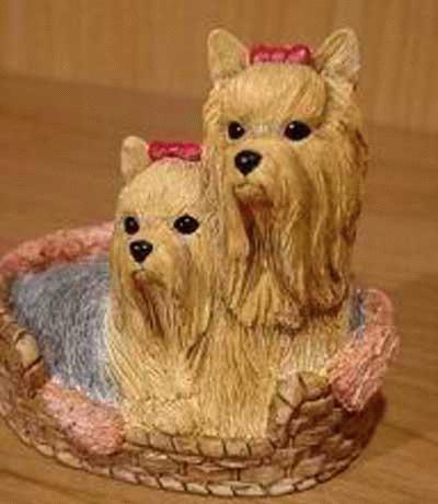 Yorkshire Terrier Mama mit Kind im Korb