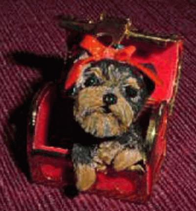 Yorkshire Terrier in einer alten Schatztruhe