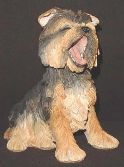 Gähnender Yorkshire Terrier