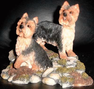 Yorkshire Terrier auf einem Fels