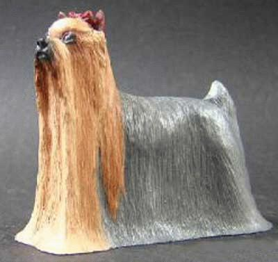 Stehender Yorkshire Terrier