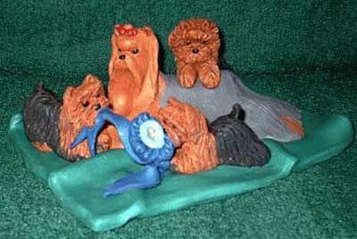 Yorkshire Terrier mit ihren Welpen