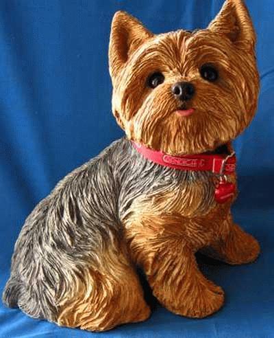 Sitzender Yorkshire Terrier - Welpe Lebensgröße