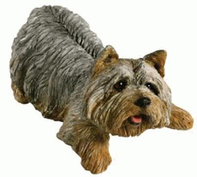 Liegender Yorkshire Terrier Welpe