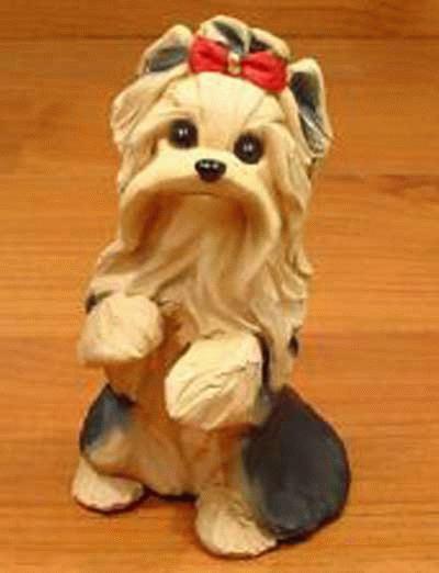 Bettelnder Yorkshire Terrier