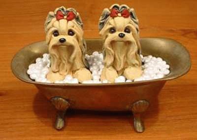 2 Yorkshire Terrier in einer Badewanne
