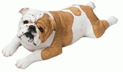 Liegende englische Bulldogge