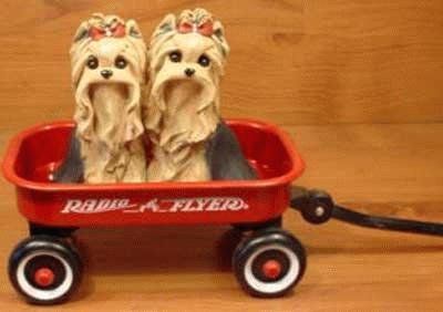 2 Yorkshire Terrier in einem Bollerwagen