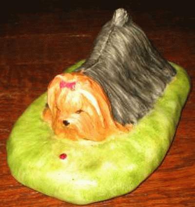 Yorkshire Terrier mit Marienkäfer