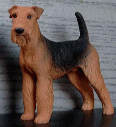 Stehender Airdale / Welsh Terrier Rüde