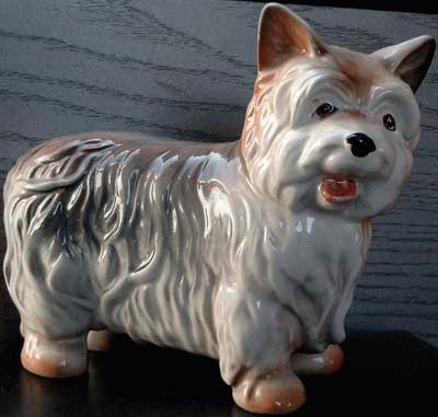 Standing Silky Terrier