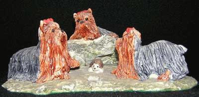 3 spielende Yorkshire Terrier