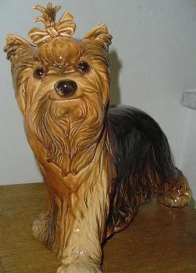 Laufender Yorkshire Terrier
