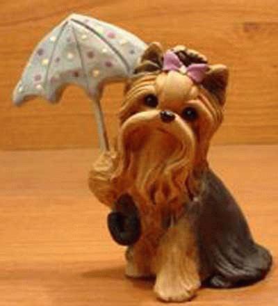 Yorkshire Terrier mit Regenschirm