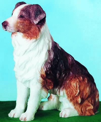Australischer Schäferhund / Collie / Sheepdog
