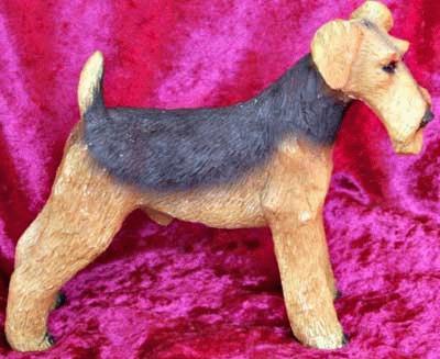 Stehender Airdale / Welsh Terrier