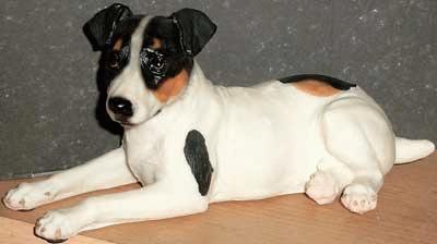Liegender Jack Russel Terrier