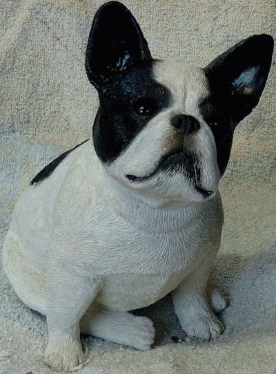 Sitzende französische Bulldogge