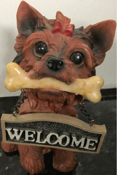 Sitting Yorkie with bone inthe mouth