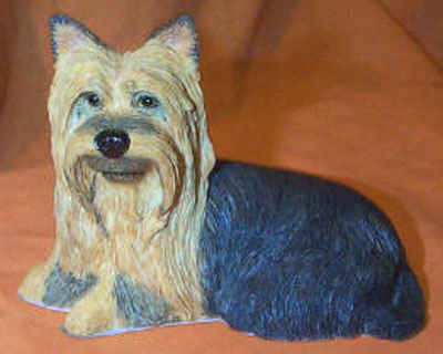 Laying Yorkshire Terrier