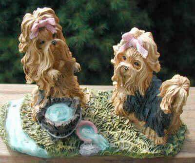 Yorkies mit  Wassereimer