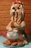 Yorkshire Terrier beim Frühstück