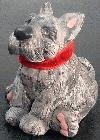 Sitting Schnauzer pup