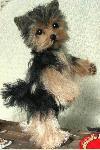 """Yorkshire Terrier """"CASSIE"""""""