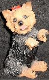 Bettelnder Yorkshire Terrier