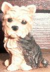 Kleiner sitzender Yorkshire Terrier