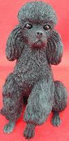 Sitting black Poodle