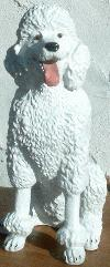 Seated white big Poodle