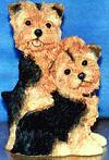 Yorkshire Terrier Tiggy & Chloe